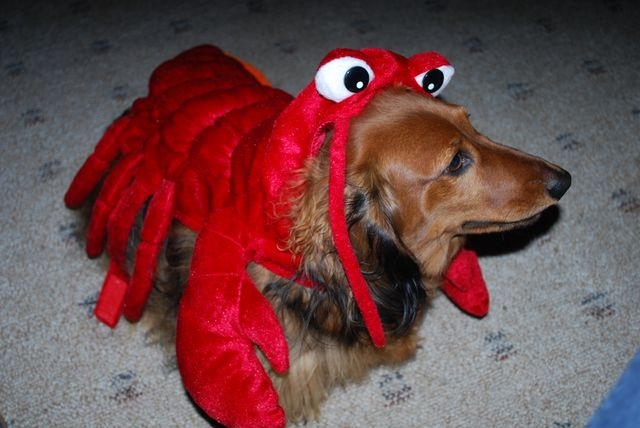 Mac Lobster!